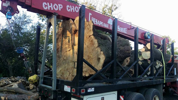 Truck With Large Tree Section