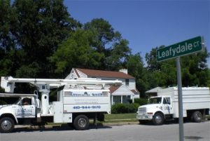 Chesapeake Tree Services Trucks Parked on Street