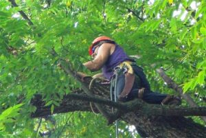 Chesapeake Tree Services Worker in Tree