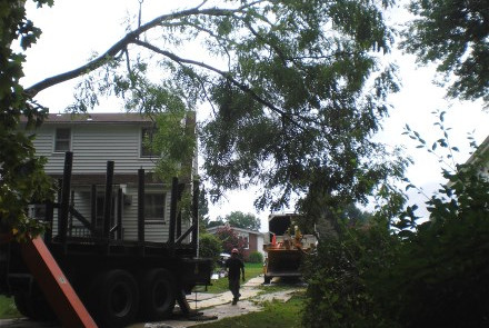 Tree Limb Being Lowered by Crane