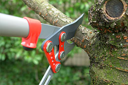 Close-Up of Tree Trimming