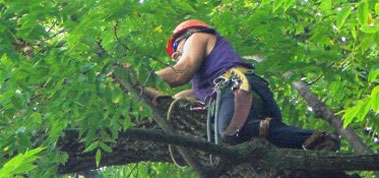 Person Pruning a Tree