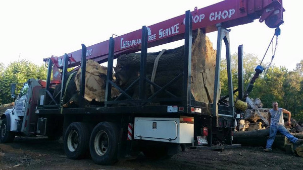 Truck Loaded with Huge Tree sections