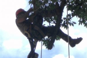 Chesapeake Tree Services Worker Suspended in Tree Using Harness