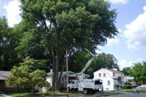 Chesapeake Tree Services Trucks in Customer's Driveway