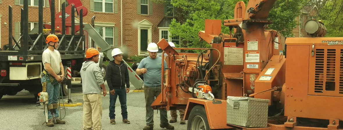 Tree Pruning Crew with Heavy Machinery