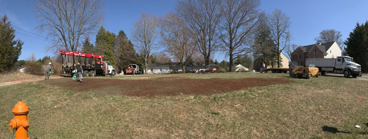 Empty Lot after Tree Removal Process